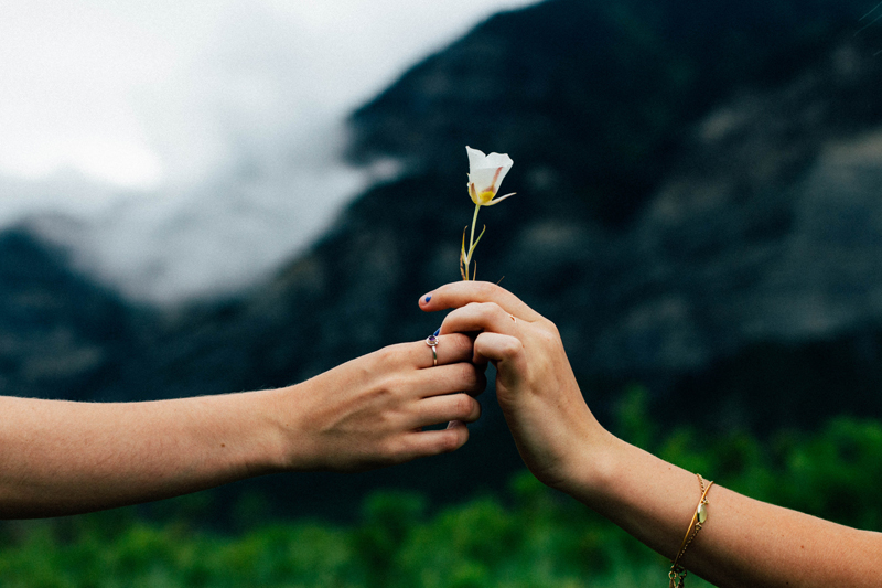 Two hands passing a flower