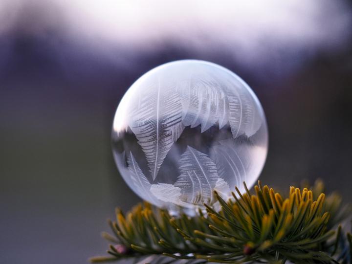 pine bubble