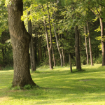 Human Behavior & Performance Data: Lessons from Trees