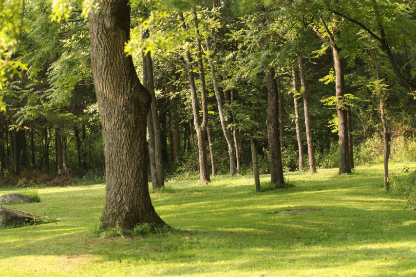 A field with trees and green grass.